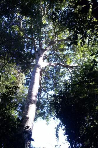 Santuario-Ecologogico-Paraguay (11)