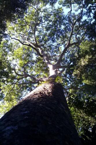 Santuario-Ecologogico-Paraguay (18)