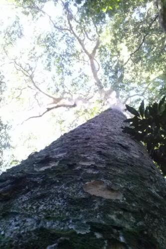 Santuario-Ecologogico-Paraguay (7)